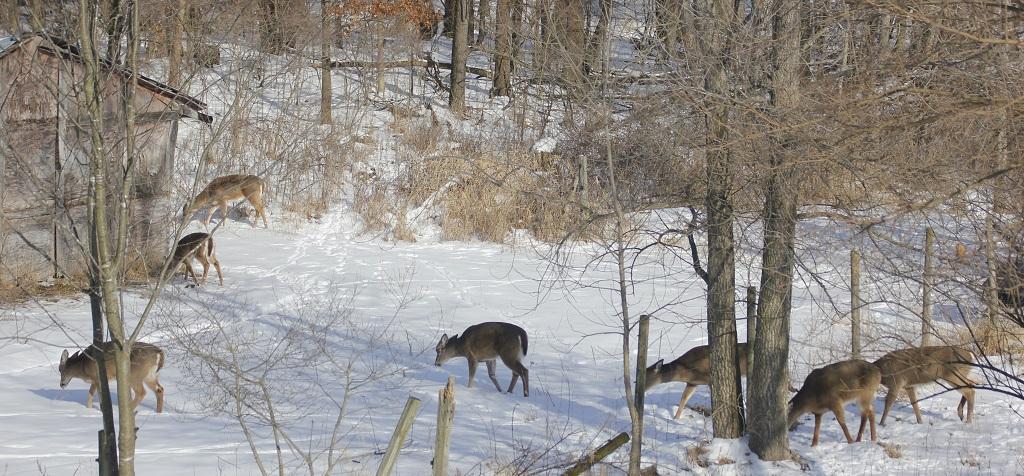 Backyard Herd Winter 20-21.jpg